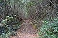 Trilho dos Canos de Água XIII (44324892132).jpg