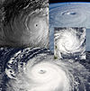 Tropical cyclone collage.jpg