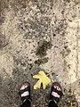 Truchard Vineyards - Nov 2018 - Stierch 10.jpg