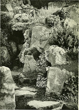 Ballad of Sir Frankie Crisp (Let It Roll) - Part of the property's rock garden, pictured in 1905