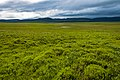 Tundra landscape looking south toward British Mountains near Engigstciak, Ivvavik National Park, YT.jpg