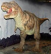 Tyrannosaurus model at NHM