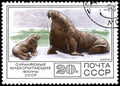 USSR stamp Walrus 1977.png