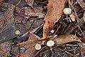 Unidentified Fungi (7360034826).jpg