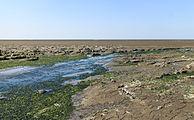 Uniek door eb en vloed steeds wisselend kweldergebied. Locatie, Noarderleech Provincie Friesland 01.jpg