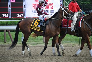 Untapable American-bred Thoroughbred racehorse