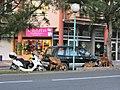 Urban Goats on Roadside (6543978451).jpg
