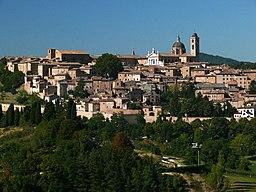 Urbino z05