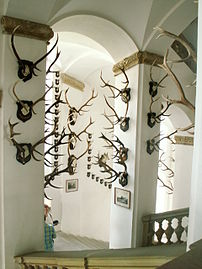 Hunting trophies in Úsov Château, the Czech Re...