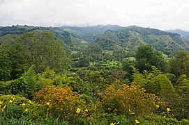 Valle de Cocora, Colombia 05.jpg