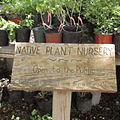 Valley Nature Center is the place to find your local South Texas native plants..JPG