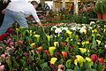 Ventimiglia flowers market.jpg