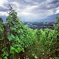 Vignoble à Saint-Alban-Leysse.jpg