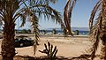 Viper in Aqaba.jpg