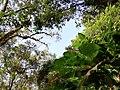 Vista de dentro da Natureza.jpg