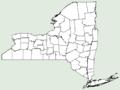 Vitis cinerea var baileyana NY-dist-map.png