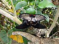 Vlinders aan de Vliet 16.jpg