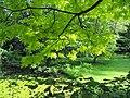 Vue du jardin sous l'arbre.JPG