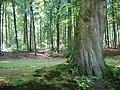WLM - Minke Wagenaar - Landgoed Rosendael 044.jpg