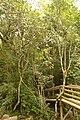 Wald auf Ausflug in Garopaba (22089448596).jpg