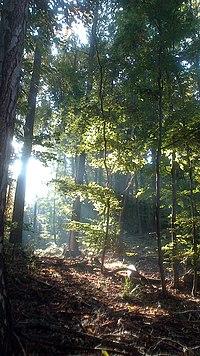 Wald im Gegenlicht.jpg