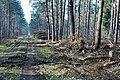 Waldweg im Forst Rundshorn IMG 4995.jpg
