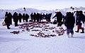 Walrus meat 1 1999-04-01.jpg