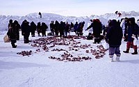 A group of people in winter clothing, standing around piles of meat lying on the snow.