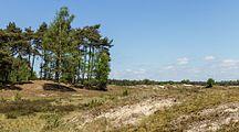 Wandeling over het Hulshorsterzand-Hulshorsterheide 13.jpg