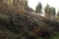 Wartenberg Landenhausen Trockenrasen Juniperus SCi 555520689 maint 6.png