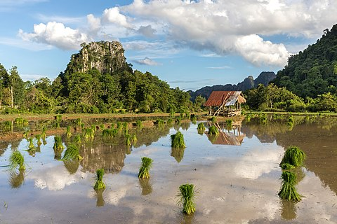 Water reflection of mountains, hut, green rice sheaves scattered in a paddy field and clouds with blue sky in Vang Vieng, Laos