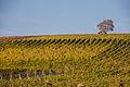 Weininsel 2014 20.jpg