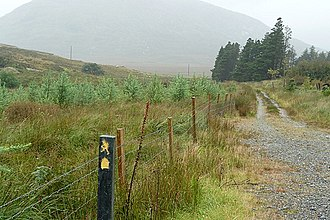 Western Way - The Western Way in Lettershanbally forest