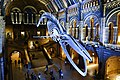 Whale bones at the London Museum of Natural History (39553807835).jpg