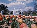 White House Spring 1975.jpg
