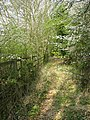 Whitwell Station - an overgrown track - geograph.org.uk - 1255635.jpg