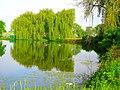 Willow Island Pond - panoramio.jpg