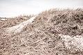 Winter Dune, Park Point Beach, Duluth 3 19 18 (40200895464).jpg