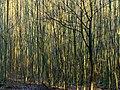 Winterstangenwald - panoramio.jpg