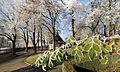 Winterzauber im Kur- und Schlosspark Bad Mergentheim. 12.jpg