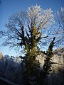 Wintry Tree - geograph.org.uk - 648553.jpg