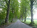 Wood alley going to Ankarudden - panoramio.jpg
