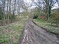 Woodland track at Gwysaney - geograph.org.uk - 736021.jpg