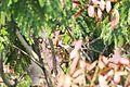 Woodpecker (1).jpg