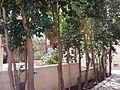 YAD BEN ZVI VIEW 74 20120911 131741.jpg