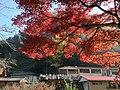 Yabakeimachi Oaza Shinyaba, Nakatsu, Oita Prefecture 871-0422, Japan - panoramio (4).jpg