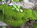 Yagur – Nesher, the Green Path – Mount Carmel 017.JPG