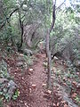 Yagur – Nesher, the Green Path – Mount Carmel 018.JPG