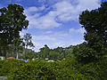 Yercaud Nature - 1.jpg