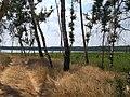Yetkulsky District, Chelyabinsk Oblast, Russia - panoramio (1).jpg